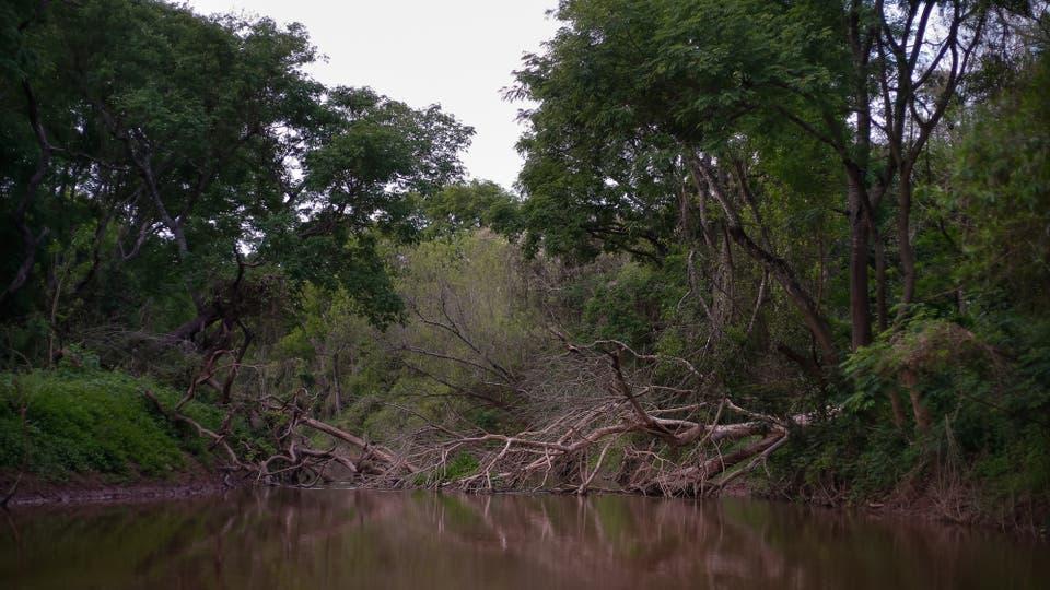 Está ubicado sobre 150.000 hectáreas entre los ríos Teuco-Bermejo y Bermejito . Foto: LA NACION / Diego Lima / Enviado especial