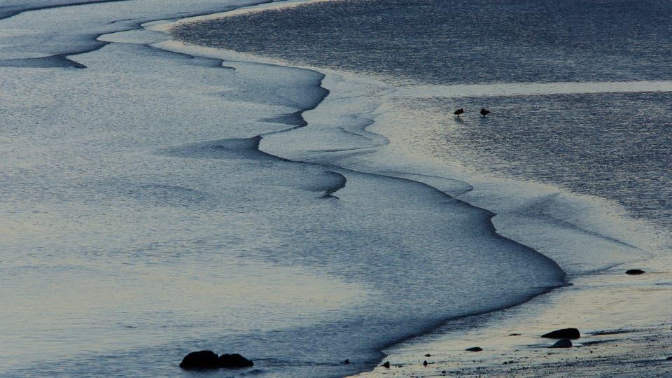 El macá tobiano pasa los inviernos en el estuario del Río Santa Cruz, que se modificará por las represas. Foto: Ricardo Pristupluk