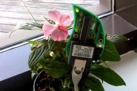 En su estudio, Hartman tiene su propia planta interactiva