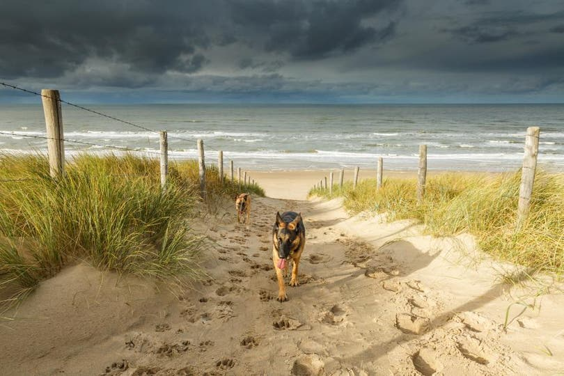 Playa Noordwijk, Holanda . Foto: National Geographic