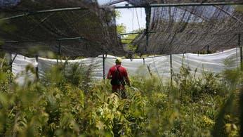 Con más de 10.000 ejemplares, buscan recuperar en la ciudad la flora nativa