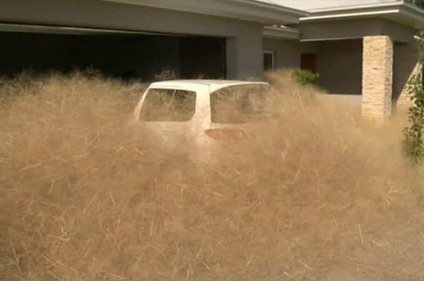 El pánico peludo aparece cada año en Australia