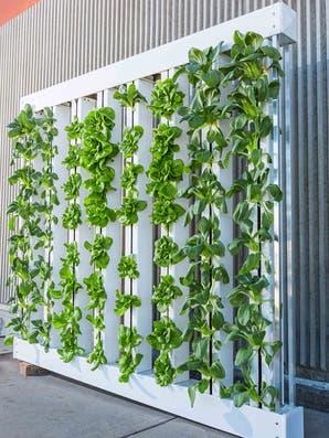 Verduras frescas: hacé una huerta hidropónica en tu casa