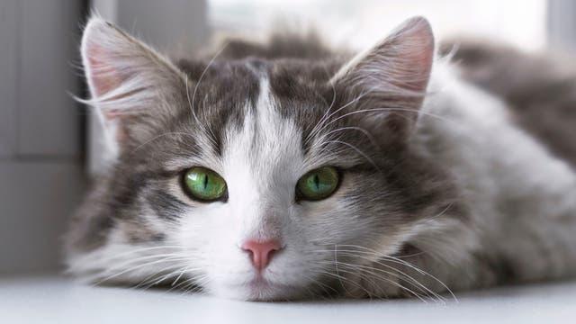 5 lugares para conocer y enamorarse de los gatos
