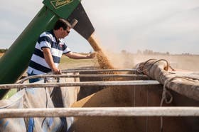 Hay informes que prevén pulsos secos para la producción en Sudamérica