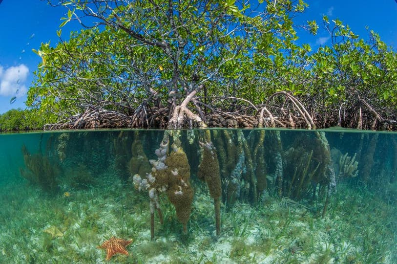 South Water Caye Marine Reserve, Playa Pelícano, Belize.. Foto: National Geographic