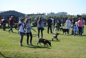 Adoptar un perro: una demostración poderosa de amor