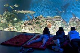 Los visitantes se deleitan viendo a las especies marinas antes de dormir