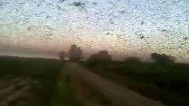 El avance de las langostas sobre la zona rural de Santiago del Estero