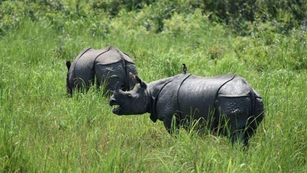 El parque nacional donde es legal matar cazadores furtivos para proteger a los rinocerontes