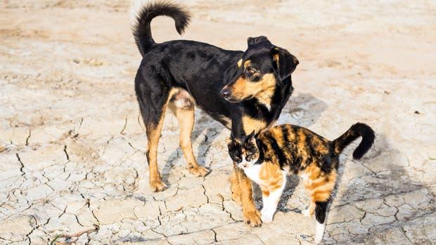 Taiwán prohibió el consumo de carne de gato y perro