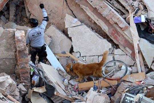 En el tercer día de búsqueda, bomberos y rescatistas, junto a perros especialmente entrenados, buscan vida entre los escombros. Foto: DyN