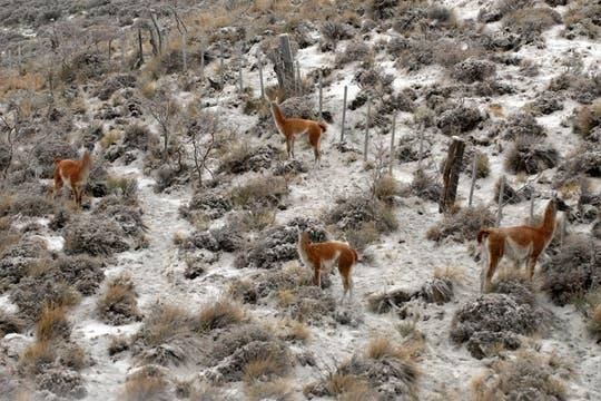 Los animales de la zona se ven seriamente afectados, sobre todo aquellos que no encuentran un refugio para protegerse de las cenizas. Foto: dpa