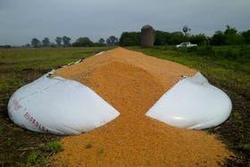 En Leones rompieron 30 silo bolsas con seis mil toneladas de granos