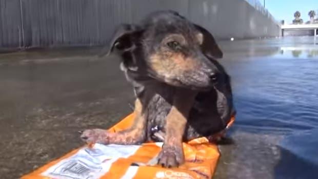 Rescataron Perrito del rio, y se encontraron algo peor.