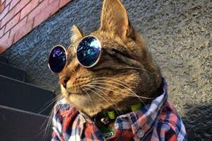 #Instacat: 5 cuentas de gatitos que tenés que seguir en Instagram