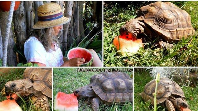 Tiene más de 70 tortugas de tres especies diferentes. Cada verano decenas de familias le llevan sus tortugas para que les de un hogar natural