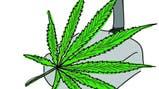 Fotos de Marihuana