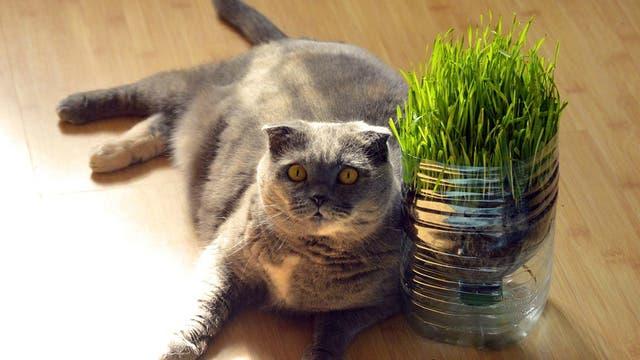 El 12% de los gatos tiene sobrepeso