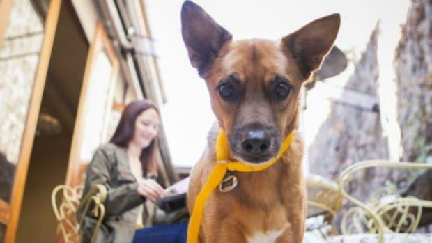 La Ciudad propone a los vecinos votar si las mascotas pueden ingresar a los locales gastronómicos