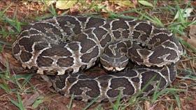 Desde hace un mes que se ven serpientes en el club