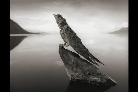 Se trata del lago Natrón, donde varios pájaros y hasta murciélagos se animan a sobrevolarlo. Foto: BBC