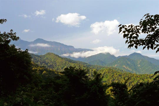La reserva natural tiene 76.306 hectáreas. Foto: Amigos del Parque Nacional Calilegua
