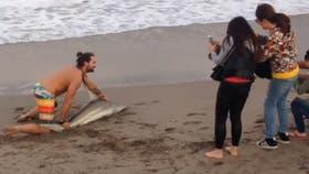 Ahora, la víctima fue un tiburón en vez de un delfín: lo sacó del agua por una foto