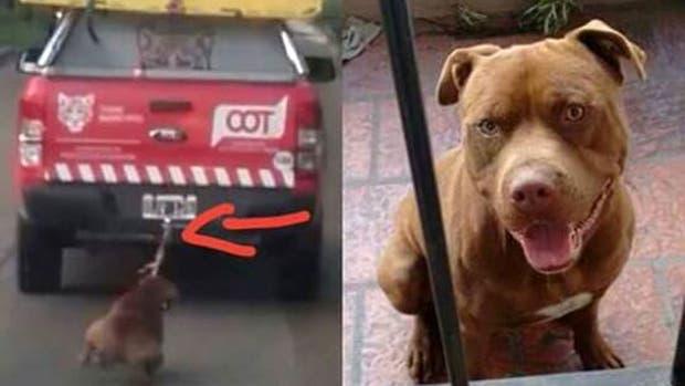 Así está hoy el perro torudo en Tigre