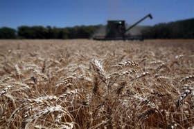 Buen año para el trigo