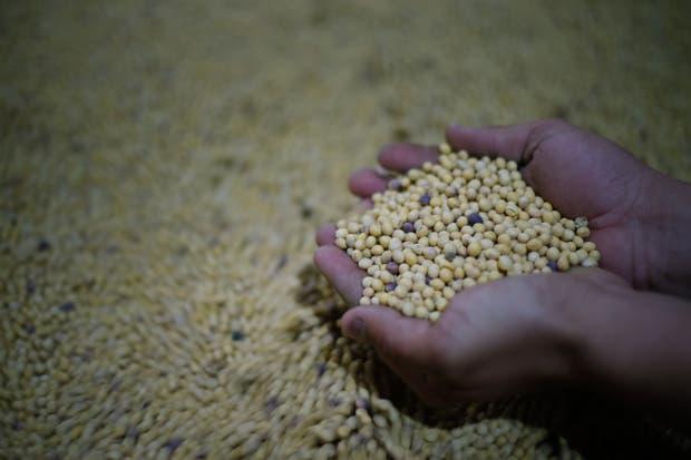 Mejoró la formalidad en el mercado de semillas