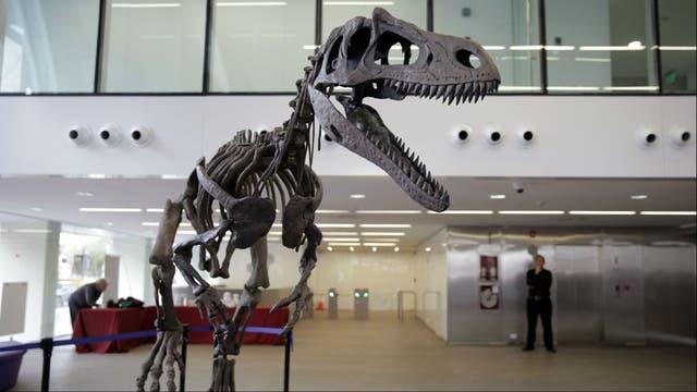 Teorías contrapuestas sobre los dinosaurios
