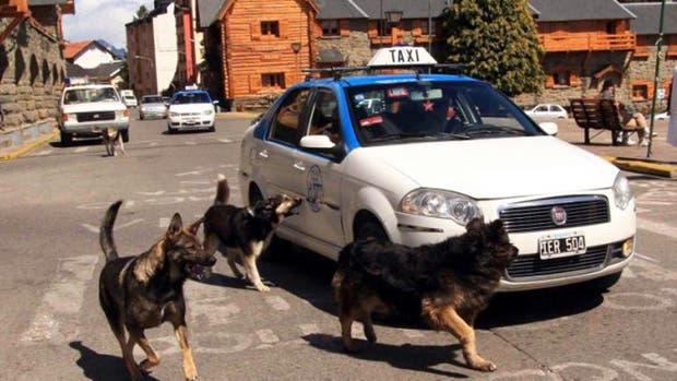 Para incentivar la adopción y resolver la problemática de la fauna urbana, ofrecen descuentos a quienes adopten perros de la calle