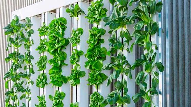 Huerta hidropónica en la que se cultivan plantas sin usar tierra