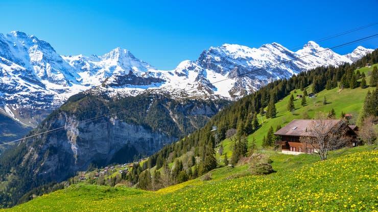 El curioso caso del gato rescatista de los alpes suizos la nacion - Casas en los alpes suizos ...