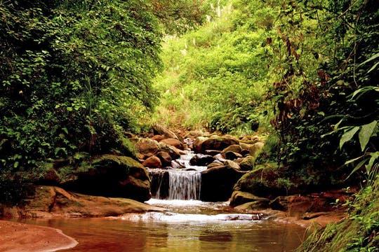 El Parque Nacional Calilegua, en Jujuy, se ubica en las Sierras de Calilegua, que le dieron su nombre. Foto: Amigos del Parque Nacional Calilegua