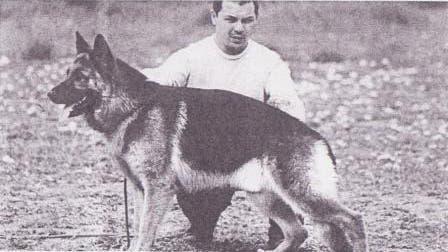 León, el perro rescatado en Plottier, celebra su día rodeado de amor