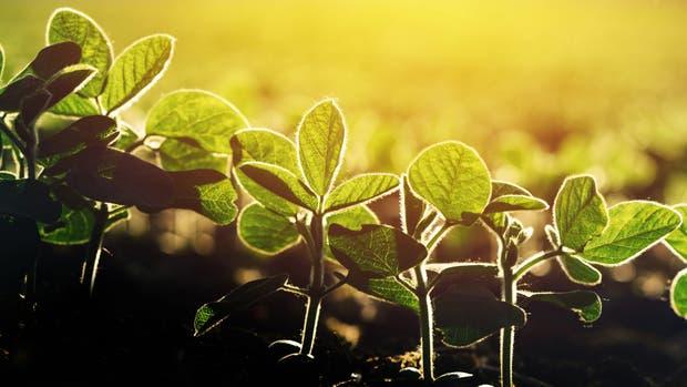 Recomiendan cuidados para el cultivo