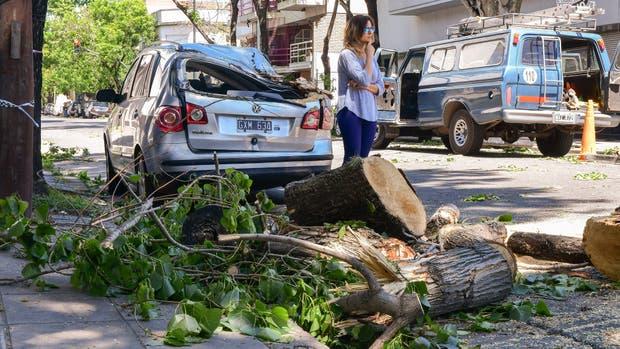 Un auto fue destrozado por un árbol porteño