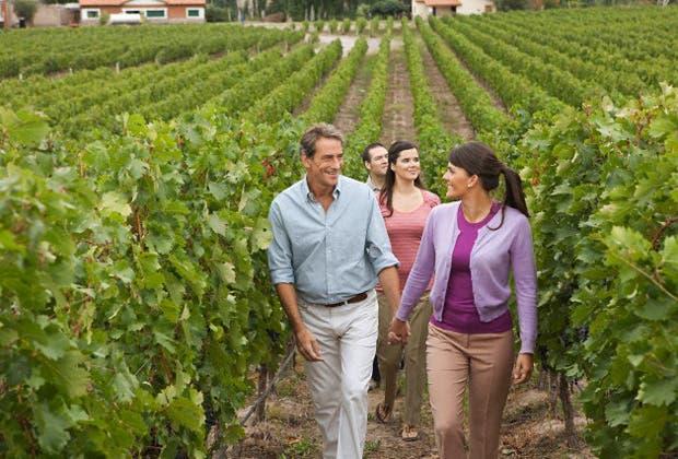 la vitivinicultura en san juan: