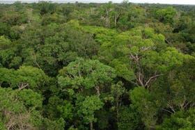 La selva amazónica absorbe toneladas de gases de efecto invernadero de la atmósfera