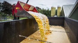 Millones de huevos han sido destruidos por estar contaminados por el pesticida.