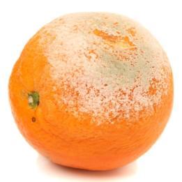 FSIS recomienda descartar la comida enmohecida que tiene un alto contenido húmedo, porque puede estar contaminada por debajo de la superficie.