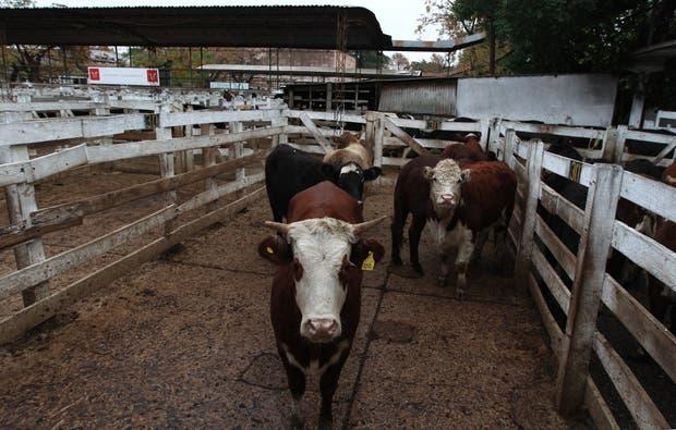 Mejoró el ingreso de animales en el mercado