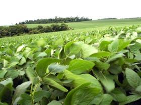El mercado, atento a los cultivos en Estados Unidos