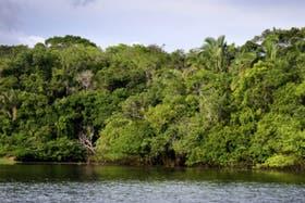 La torre ATTO permitirá examinar con todo detalle el clima en el Amazonas