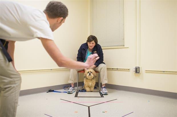 El entrenamiento canino está en auge