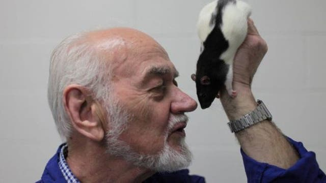El neurocientífico Jaak Panksepp le hace cosquillas a las ratas para que estas se rían