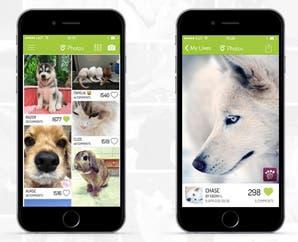 6 apps que no pueden faltar si te vas de vacaciones con tu perro