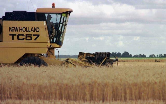 Por primera vez, el cereal argentino llegará a México